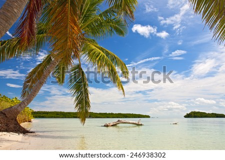 Palm trees, ocean and blue sky on a tropical beach in Florida keys near famous tourist destination Key West on a sunny summer day - stock photo