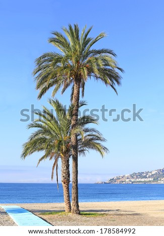 palm trees on a beach - stock photo