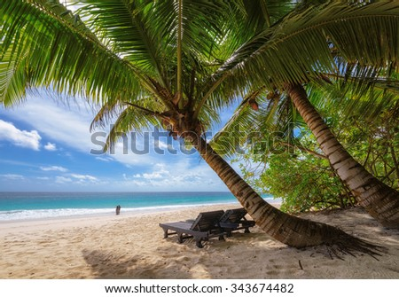 Palm trees on a beach at Praslin island, Seychelles - stock photo