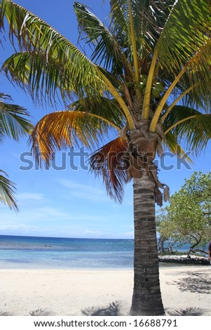 Palm Trees on a Beach in the Caribbean - stock photo
