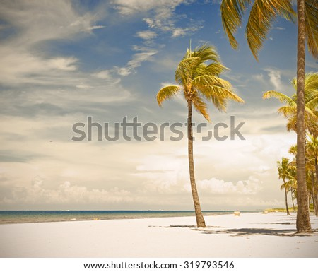 Palm trees on a beautiful sunny summer afternoon in Hollywood Beach near Miami Florida with Instagram filter processing for vintage looks - stock photo