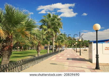 palm trees on a footpath with a beautiful blue sky