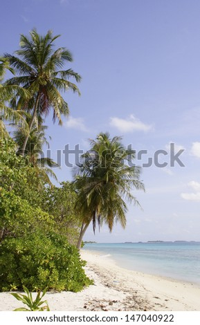 palm trees on a sandy beach, Maldive Islands - stock photo