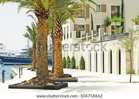 Palm trees on a sunny day in the marina Porto Montenegro in Montenegro
