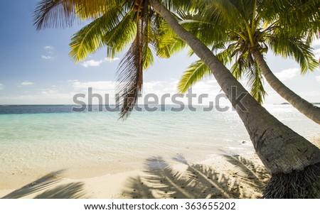 palm trees on beach with blue sky a crystal clear sea on tropical island fiji - stock photo
