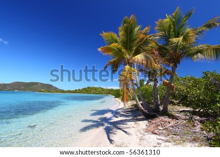 Palm trees on Beef Island beach - British Virgin Islands. - stock photo