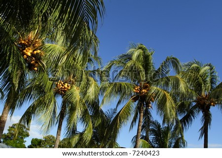 Palm Trees on Blue