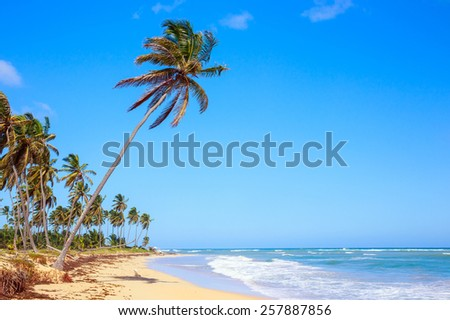 Palm trees on caribbean beach in Dominican Republic - stock photo