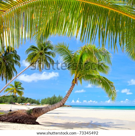 Palm trees on luxury exotic beach in tropical hotel. Summer view. - stock photo