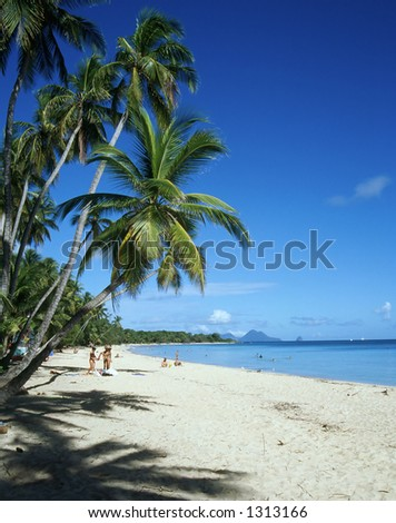 Palm Trees on Martinique Beach - stock photo