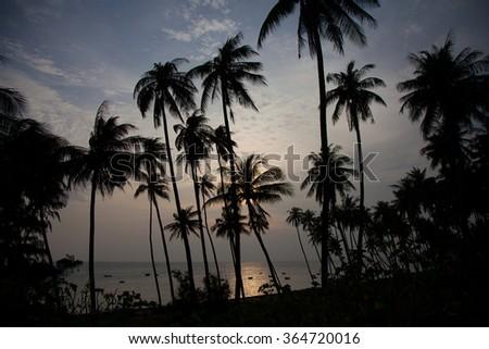 palm trees on the beach - stock photo