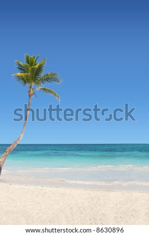 Palm Trees on the Beach - stock photo