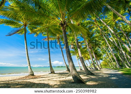 Palm trees on the beach of Palm Cove in Australia - stock photo