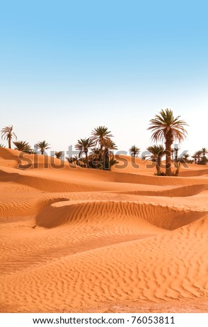 Palm trees on the desert in Morocco - stock photo