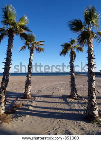 Palm trees on the sand