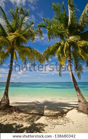 Palm trees on the sand beach 03 - stock photo