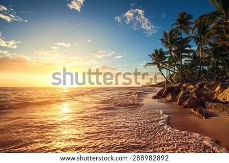 Palm trees on the tropical beach, sunrise shot - stock photo