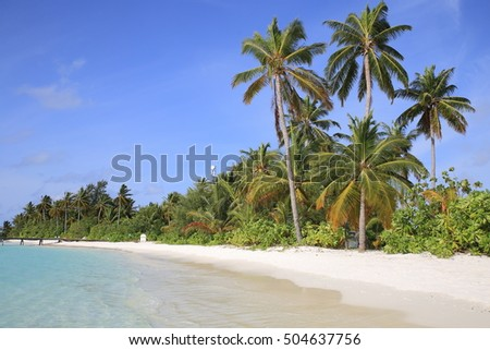 Palm trees on the white beach along the blue lagoon of Maldives