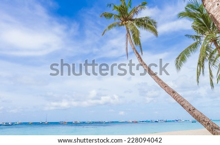palm trees on tropical beach and sea background, summer vacations