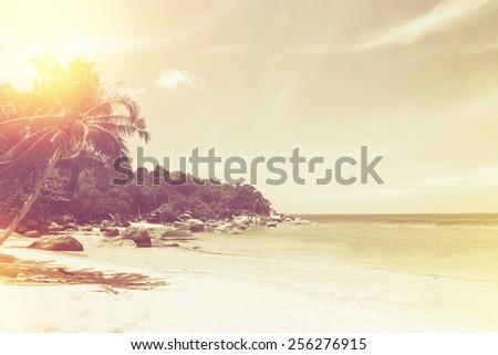Palm Trees On Tropical Beach Vintage Foto de stock (libre de ...