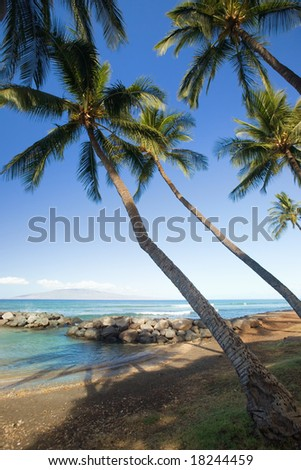Palm trees on tropical beach with lagoon - stock photo