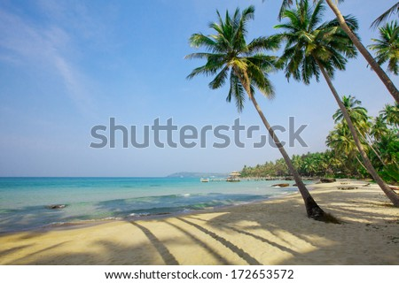 Palm trees on tropical paradise beach - stock photo