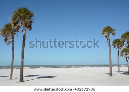 palm trees on white sand beach - stock photo