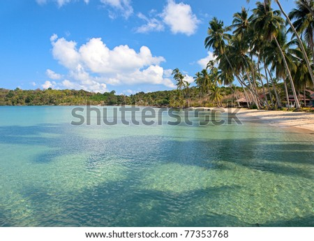 Palm trees shadows in clear blue sea water near tropical coastline