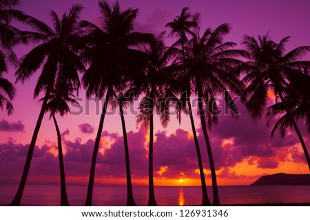 Palm trees silhouette at sunset on tropical island, Thailand - stock photo