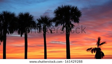 Palm trees silhouette on sunset sky