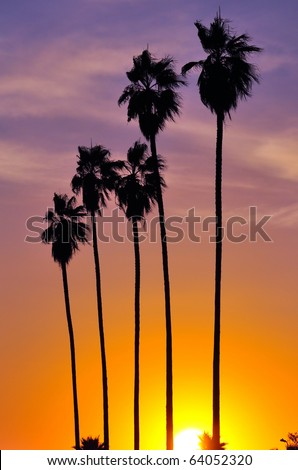Palm trees silhouetted against late afternoon sun - stock photo