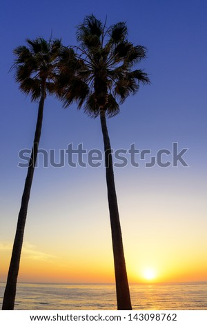 Palm trees silhouetted at sunset in La Jolla, California. - stock photo