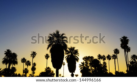 Palm trees silhouetted at sunset  in Palm Springs, California. - stock photo