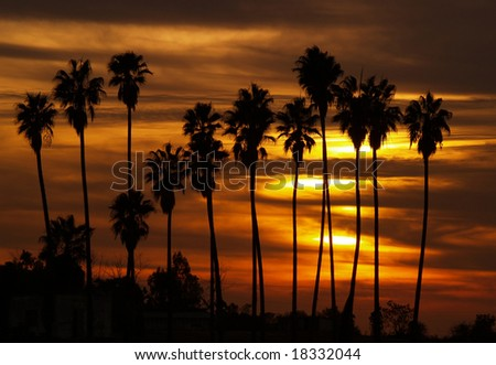 Palm trees silhouettes at sunset