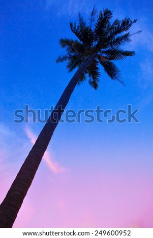 Palm Trees silhouettes on the Colorful Sky Sunrise background  - stock photo