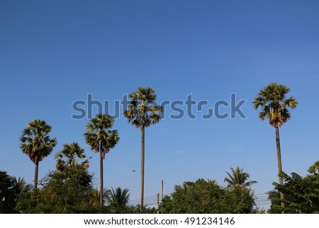 Palm trees the sky background