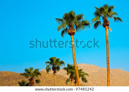 Palm trees with blue sky in Palm Springs California USA