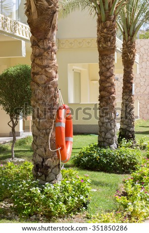 palm trees with lifeline in the garden of Egypt