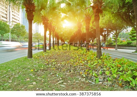 Palm trees with mition cas in the city center. - stock photo