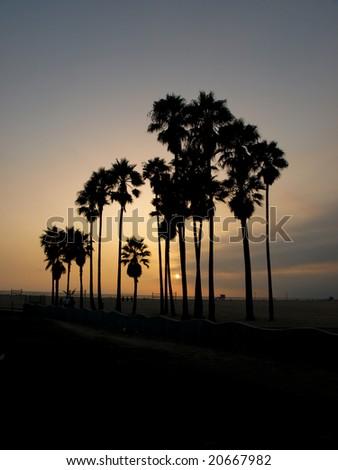 Palm trees with setting sun on the horizon - Venice beach - California - stock photo