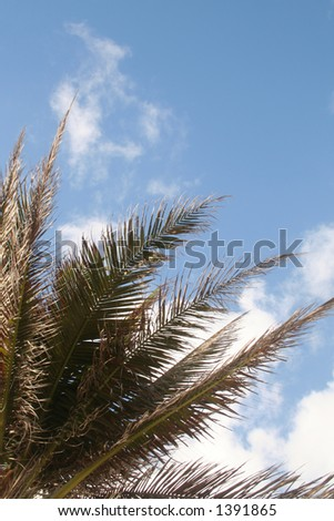 Palm with copyspace - stock photo