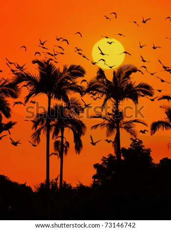 palm with sunset and birds - stock photo