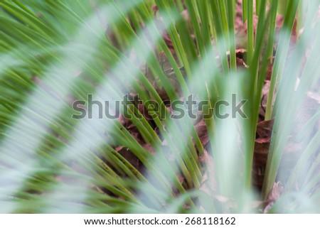 palma lines - stock photo
