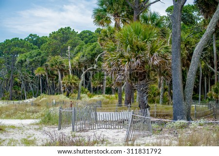 palmetto forest on hunting island beach - stock photo