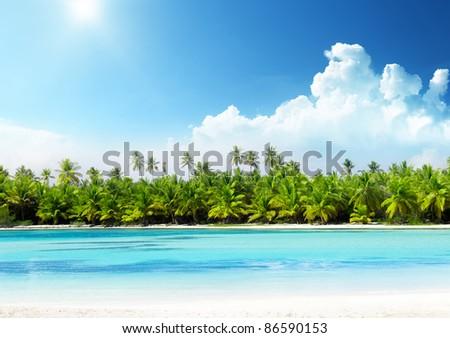 palms and beach - stock photo