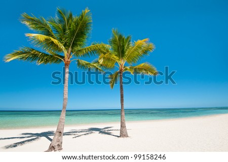 Palms and beach on tropical island