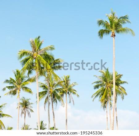 palms at blue sky background  - stock photo