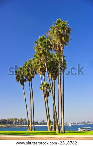 Palms at Mission Bay, San Diego - stock photo