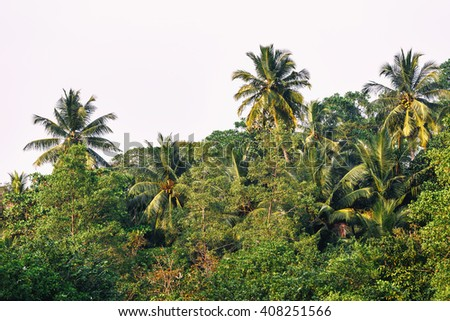 Palms green tree  - stock photo