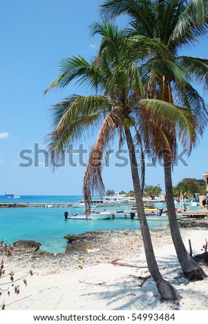 Palms growing on Grand Cayman island Seven Mile Beach (Cayman Islands). - stock photo